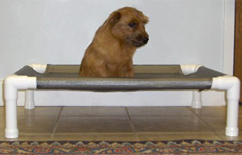 Dog on a PVC Bed
